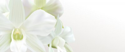 Fototapeta Gift certificate, Voucher with realistic white orchid flower bouquet. Blank background template useful for wedding design, invitation card or coupon