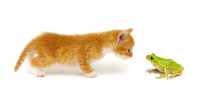 Ginger cat  and green tree