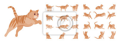 Fototapeta Ginger Tabby Cat set. Active healthy kitten with orange, red, and yellow-colored fur, cute funny pet. Vector flat style cartoon illustration isolated on white background, different views and poses