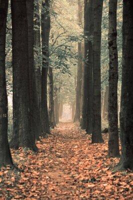 Fototapeta głębia parku ukojeniem w odzyskaniu zdrowia psychicznego