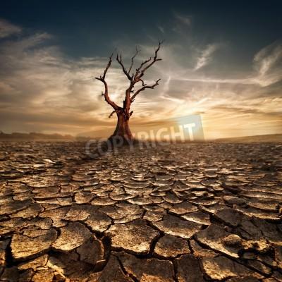 Fototapeta Globalne ocieplenie koncepcji Samotne drzewo martwe pod dramatycznego słońca wieczorem niebo na suszę pęknięty pustynny krajobraz
