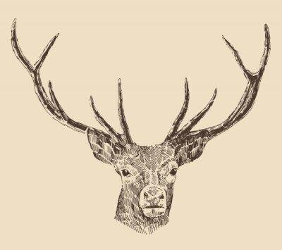 Fototapeta głowa jelenia grawerowanie stylu vintage, ilustracja