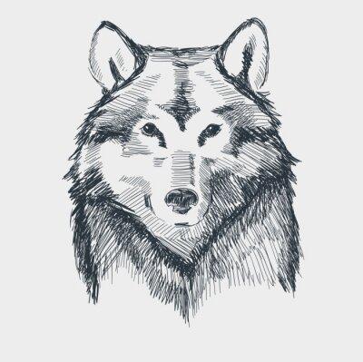 Fototapeta Głowa wilka grunge wyciągnąć rękę szkic ilustracji wektorowych