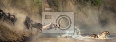 Fototapeta Gnu przecinają rzekę Mara. Wielka Migracja. Kenia. Tanzania. Park Narodowy Masai Mara.