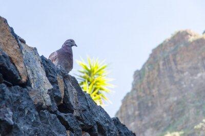 Fototapeta Gołąb ptak siedzi na kamiennym murem, palmy i góry w tle