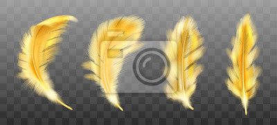 Fototapeta Golden yellow fluffy feather vector realistic set isolated on transparent background. Gold feathers from wings of birds or angel, symbol of softness and purity, design element