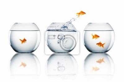 Fototapeta Goldfish jump