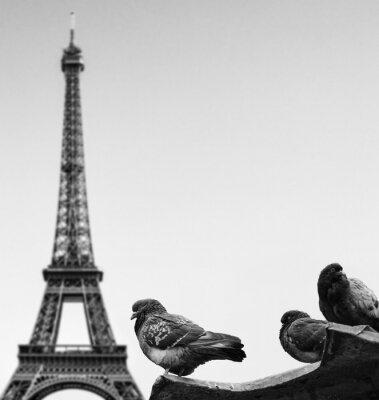 Fototapeta Gołębie przeciwko wieży Eiffla - Paryż Francja