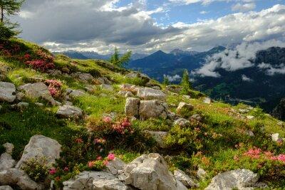 Fototapeta Górska łąka z kwiatami i skałami na Dolomitach Alta 1, Alta Via 1, Włochy