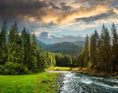 Fototapeta Górskie rzeki w lesie sosnowym