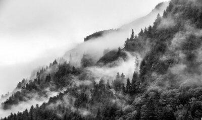 Fototapeta Góry góry z sosny z mgłą w czerni i bieli