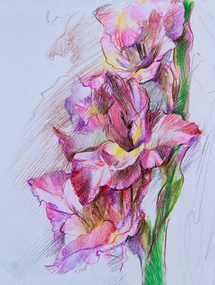 Fototapeta Graphic drawing of purple irises on a blue background. A bouquet of flowers to decorate a postcard. Background or print on the package. Picture on the wall.Made in the technique of colored pencil .