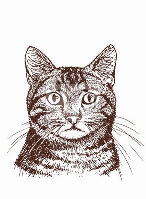 Fototapeta Graphical vintage portrait of cat, sketchy illustration