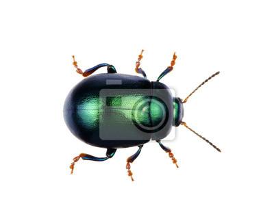 Fototapeta Green beetle