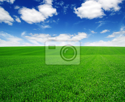 green field and blue sky