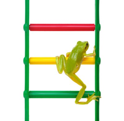 Green frog on the ladder