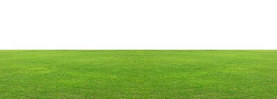 Fototapeta Green grass field isolated on white background, for montage product display. with clipping path