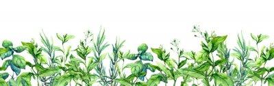 Fototapeta Green grass, wild plants, meadow herbs, summer field. Floral border. Watercolor stripe