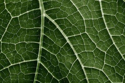Fototapeta green leaf close up in the detail