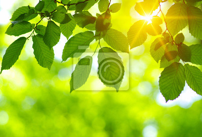 Green leaves and sun