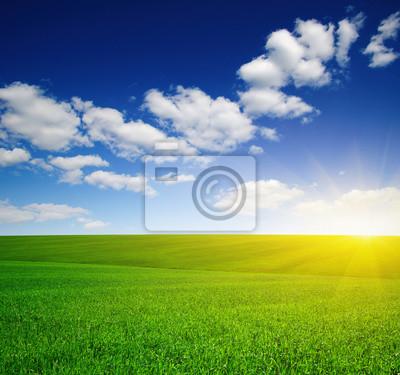Green meadow and sun.