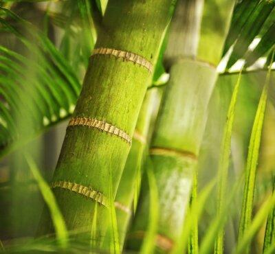 Fototapeta Green plant close -up