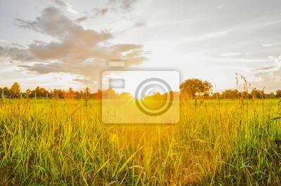 Greenfield i piękny zachód słońca