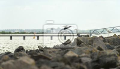 Grey Heron połowów w jeziorze