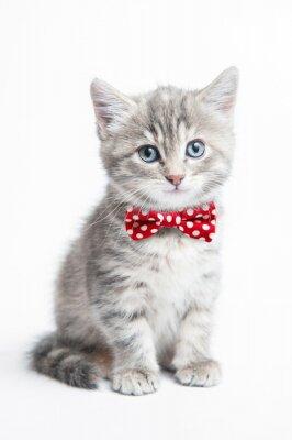 Fototapeta Grey kitten with a bow tie