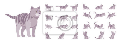 Fototapeta Grey striped Cat set. Active healthy kitten with mackerel tabby colored fur, funny pet, playful companion. Vector flat style cartoon illustration isolated, white background, different views and poses
