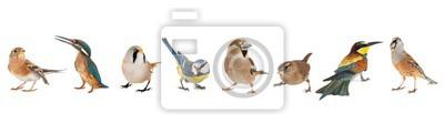 Fototapeta Group of birds isolated on white background