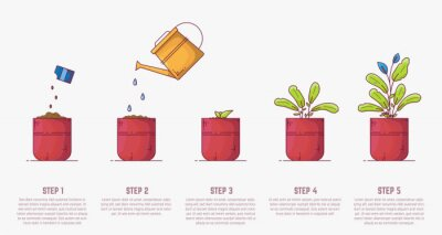 Fototapeta Growing plant stages. Seeds, watering can, sprout and grown plant. House plant in flowerpot. Line style flat illustration of house plant with leaves in pot. Thin lines. Growing process.