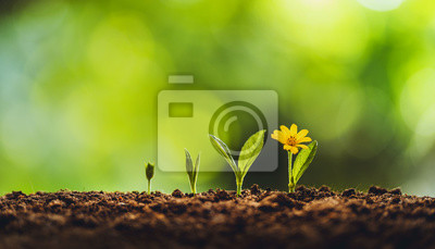 Fototapeta Growth tree young plant Natural green background