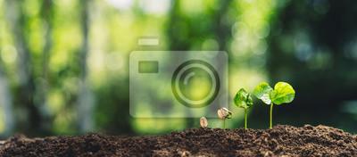 Fototapeta Growth Trees concept Coffee bean seedlings nature background Beautiful green