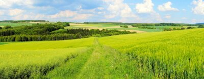 Fototapeta Grüne Frühlingslandschaft Panorama
