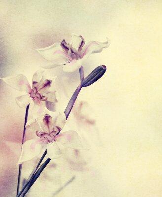 Fototapeta Grunge kwiatów orchidei