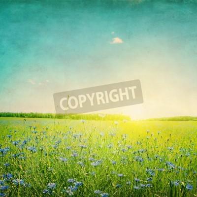 Fototapeta Grunge obraz zachód słońca nad dziedzinie rolnictwa z niebieskie chabry