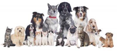Fototapeta Grupa psów i kotów