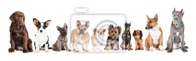 Fototapeta Grupa różnych psów