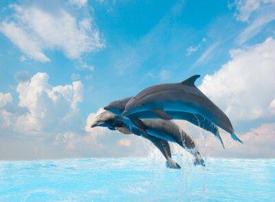 Fototapeta grupa skoków delfinów
