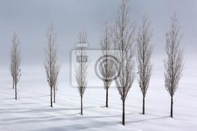 Grupa topoli w miękkim, spokojnym i śnieżnej w zimie środowiska