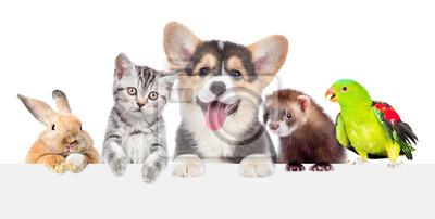 Fototapeta Grupa zwierząt domowych razem nad białym sztandarem. na białym tle
