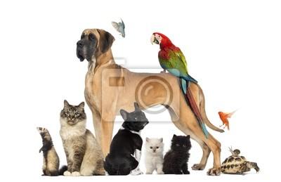Fototapeta Grupa zwierząt - psów, kotów, ptaków, gadów, królik, ...