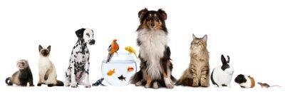 Fototapeta Grupy zwierząt domowych siedzi przed białym tle