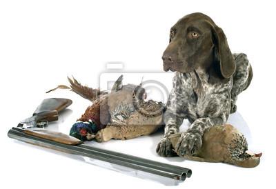 Fototapeta gry myśliwskie i pies