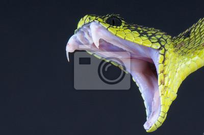 Fototapeta Gryzie wąż