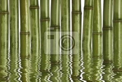 Fototapeta grzywny obraz różnych bambusa, tło charakter