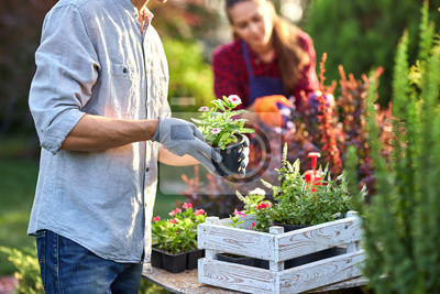 Fototapeta Guy gardener in garden gloves puts the pots with seedlings in the white wooden box on the table and a girl prunes plants in the wonderful nursery-garden on a sunny day.