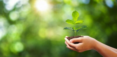Fototapeta hand holding young plant on blur green nature background. concept eco earth day