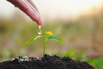 Fototapeta hand watering young plant in garden. eco earth day concept